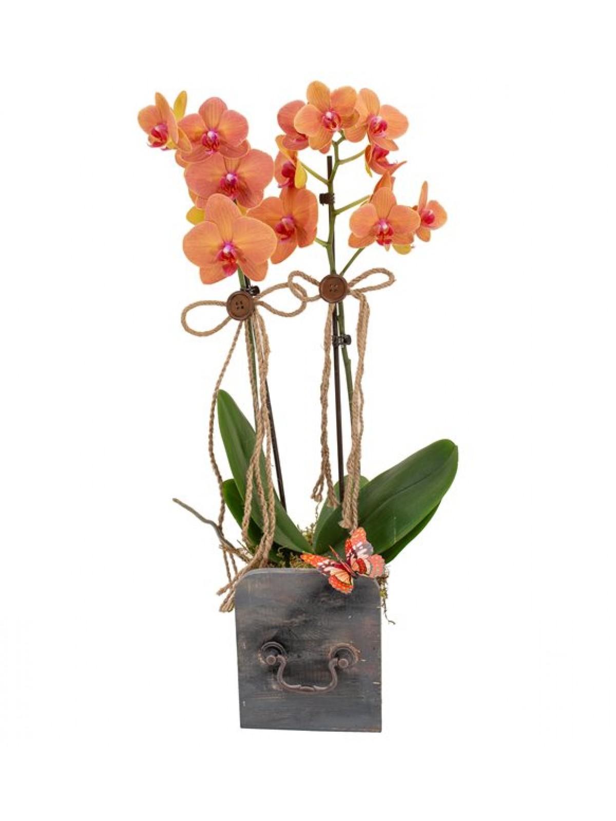 Orkide orange and Grey