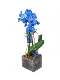 Mavi orkide & ahşap