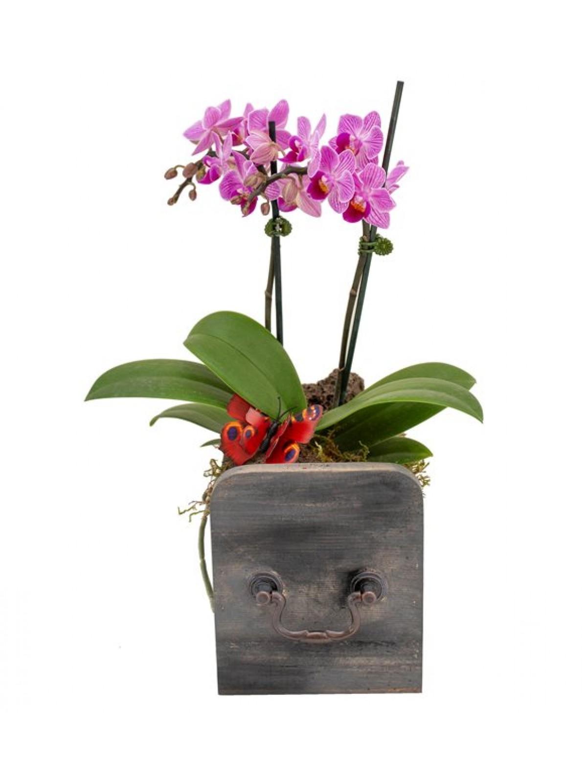 Orkide Mini Purple and Grey