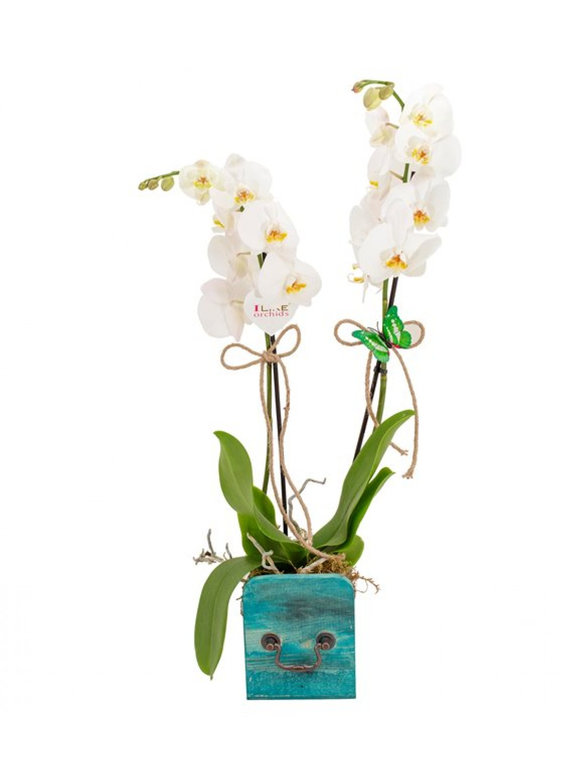 Orkide White and Turquoise