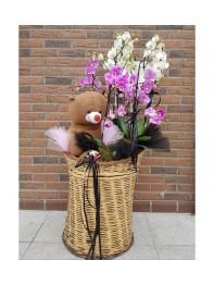Orkide Karnavalı