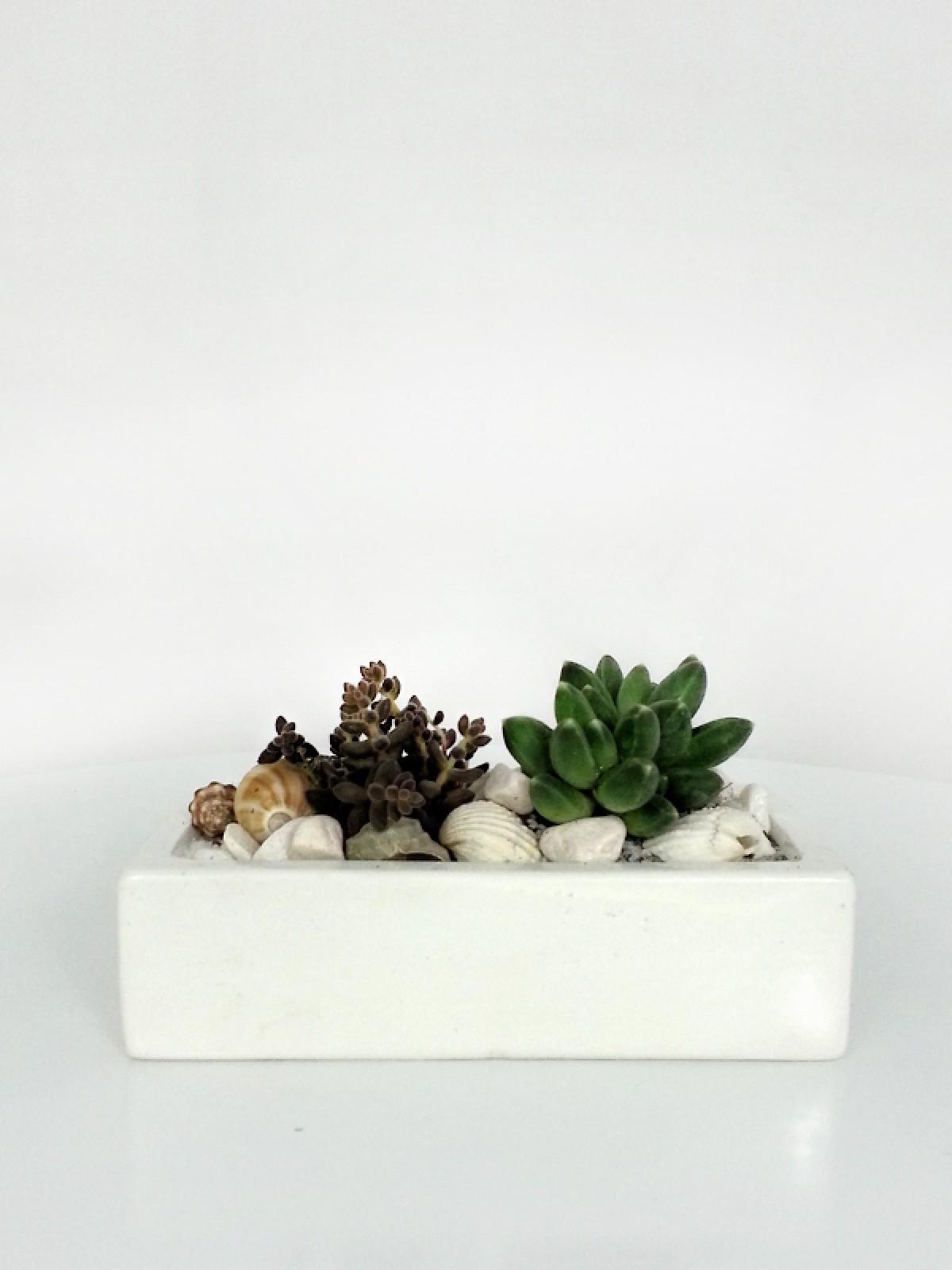 Seramikte İkili Succulents