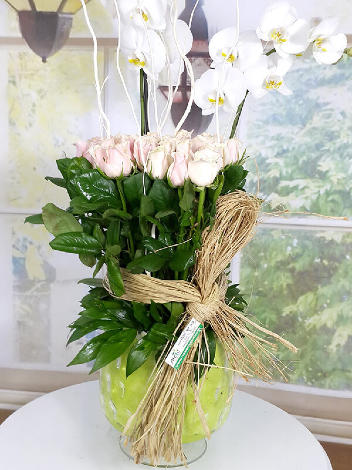 Orkide41
